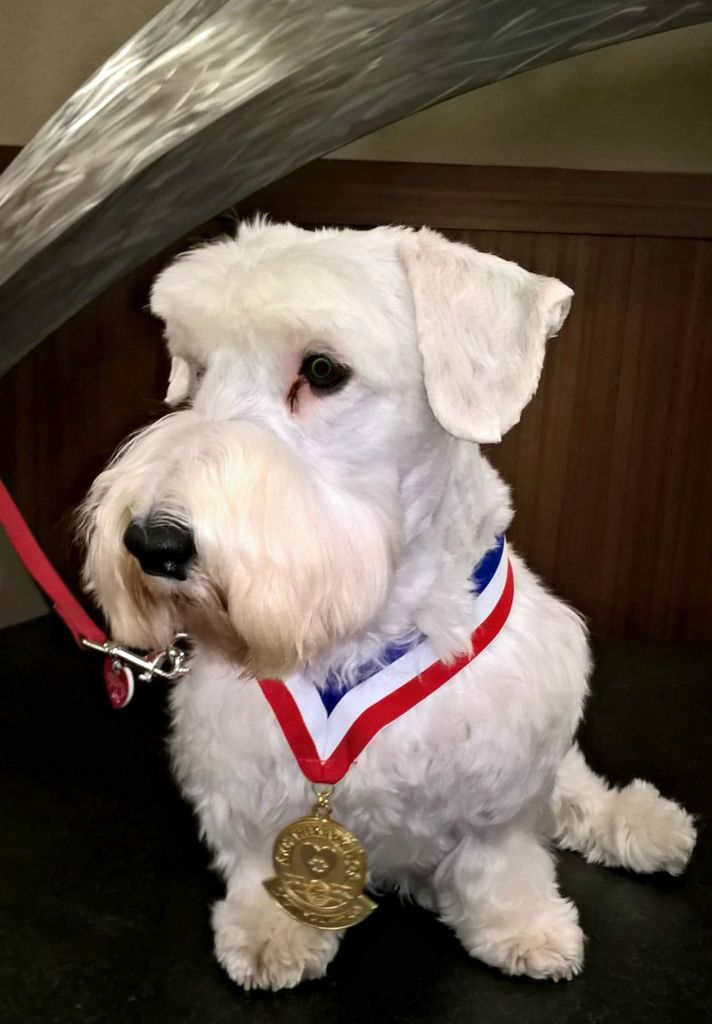 Jasper - Distinguished Therapy Dog Award