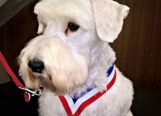 Jasper - Distinguished Therapy Dog Award