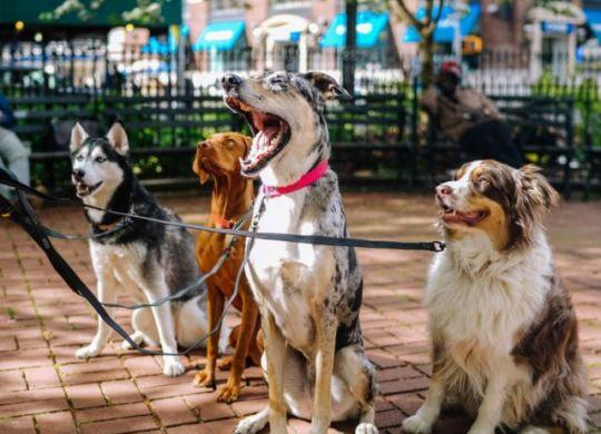 national-dog-day-640x514